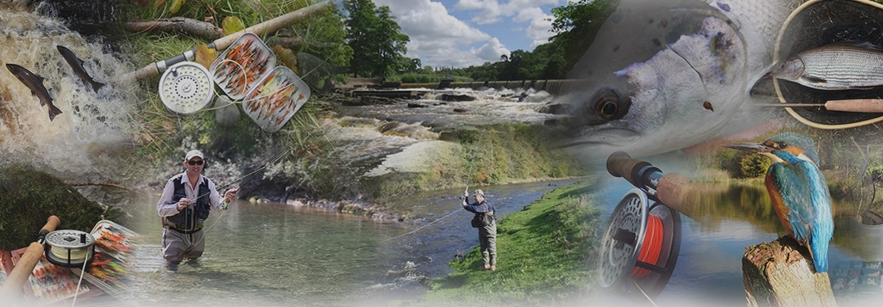 EXCITING GAME FISHING IN THE BEAUTIFUL RIBBLE VALLEY